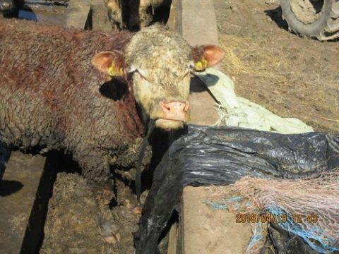 Farmer guilty of keeping animals in appalling conditions